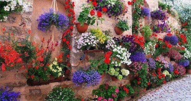 двор в цветах
