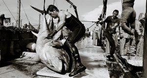 В Валенсии открылась выставка, посвященная ловле тунца