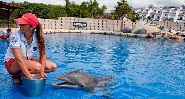Испания – страна дельфинов!