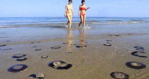 На пляжи Таррагоны вышли медузы