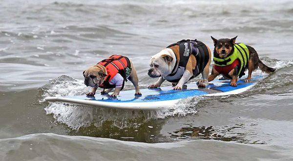 Хотите пойти на пляж с собакой? Нет проблем!