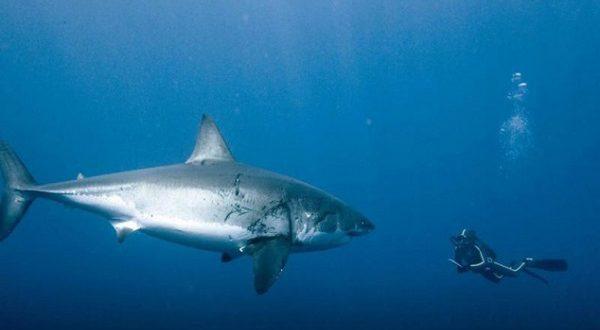 На пляже Аликанте акула атаковала человека