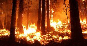 Остров Ла Пальма объят пожарами