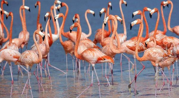 В Андалусии проведена акция по кольцеванию фламинго