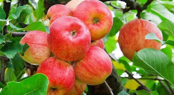 Октябрь – яблочная пора в Испании
