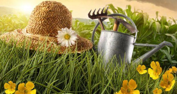 Разработка органоминеральных удобрений
