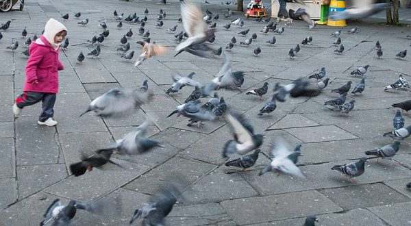 В Аликанте готовят закон, предусматривающий штрафы за тех, кто любит гоняться за голубями