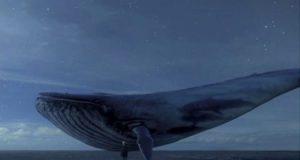 «Синий кит» появился в Испании