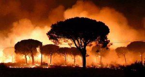 В заповеднике Доньяна полыхает пожар