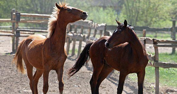 Торговавшие кониной под видом говядины испанцы задержаны полицией