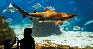 aquarium-de-barcelona