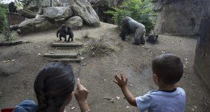 Учащиеся школ Барселоны определят судьбу городского зоопарка