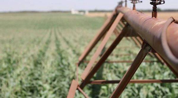 Испанские ученые придумали, как вырастить урожай в условиях засухи
