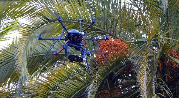Пальмы защитят дроны