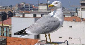 В Картахене дали отпор чайкам