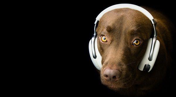18 сентября в Рафельбуньоле состоится собачий концерт