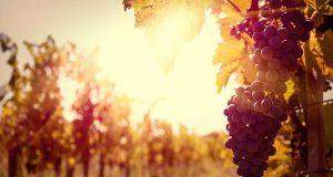 Испанские вина приедут в Москву