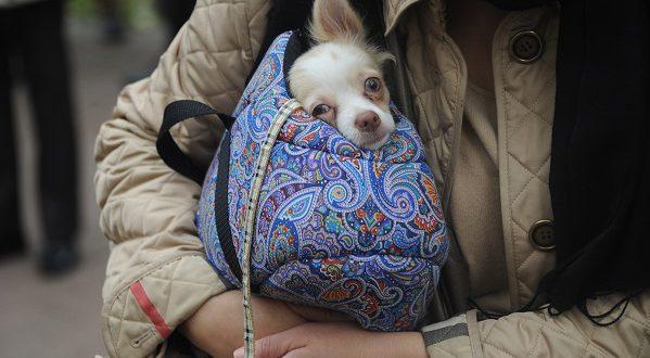 В Мадриде будут финансово наказывать за жестокое обращение с животными