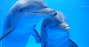 Каталонская общественность выступила за закрытие дельфинария