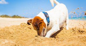 В будущем сезоне на пляже Левант можно будет отдыхать с собаками