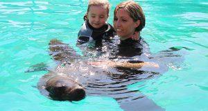Биопарк Faunia предлагает всем желающим поплавать с морскими котиками