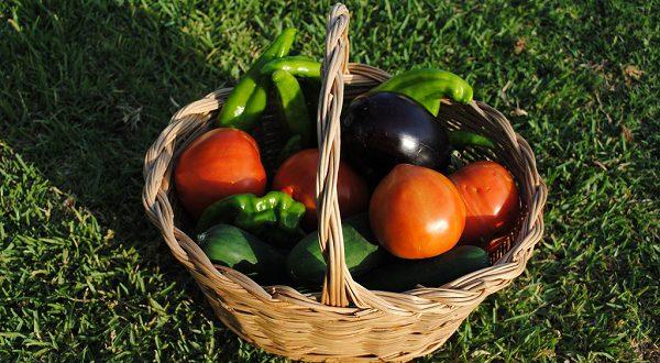 В Испании за 20 лет «зеленые» продукты стали популярнее в 248 раз