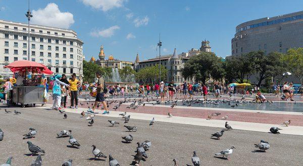 Кормление голубей на площади Каталонии будет запрещено