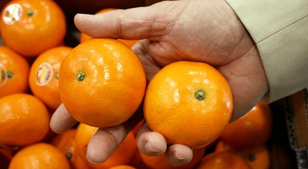 «Весеннее солнце» - самый сладкий сорт мандарина