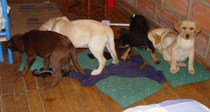 Ветеринар-варвар задержан в Испании, ему предъявлено обвинение