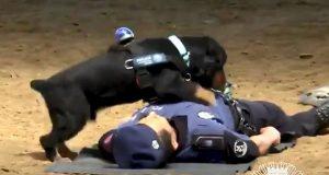 Служебный пес научился приемам реанимации человека