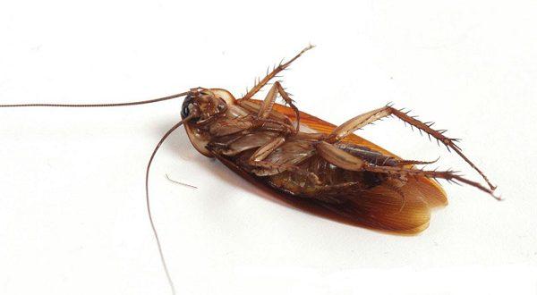 В 2018 году в Испании ожидается «нашествие» тараканов