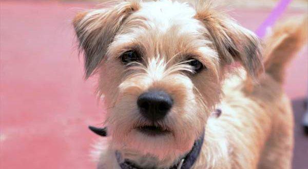В Гранаде открываются курсы для собак