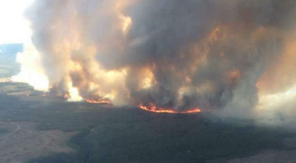 Европу охватят лесные пожары невиданных масштабов