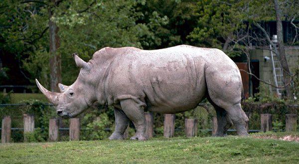 ПланTIFIESзащитит редкие виды животных от браконьеров