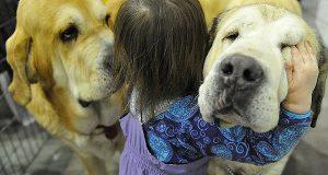 ВластиЖироныпланируют ввести ограничения начисло собак