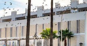 5000 голубей вывезут из Кадиса